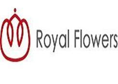 老爷花店(Royal Flowers)